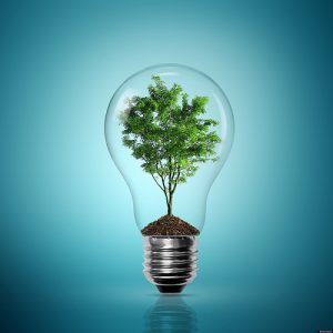 bonsai in a lightglobe
